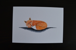 Red fox, painted postcard