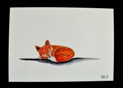 Little red fox, printed postcard