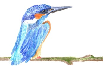 watercolor painting of a kingfisher