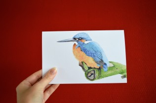 folded postcard kingfisher
