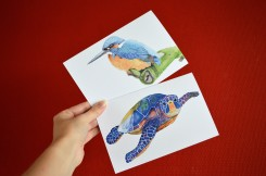 folded postcards kingfisher and turtle