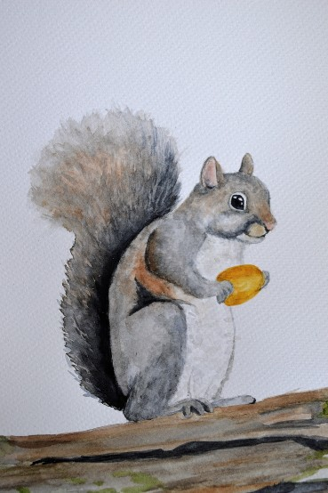 Watercolor painting of a squirrel