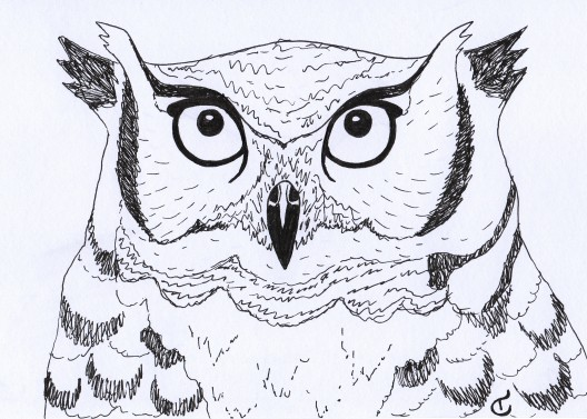 black and white illustration of an owl