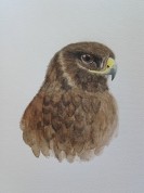 Portrait of a buzzard made with watercolors