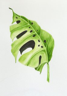 watercolorpainting of a monstera leaf
