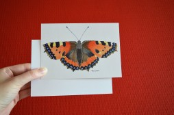 postcard tortoiseshell butterfly